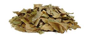 Abacateiro (Persea gratissima) - Matéria Prima