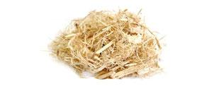 Algodoeiro (Gossypium herbaceum L.) - Matéria Prima