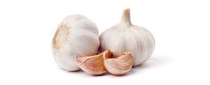 Alho (Allium sativum L.) - Matéria Prima