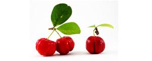 Acerola (Malpighia glabra L.) - Matéria Prima