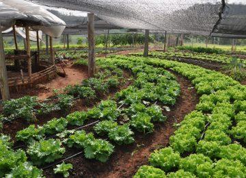 Curso Agricultura Familiar de Base Agroecológica